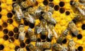 Заговоры на пчел