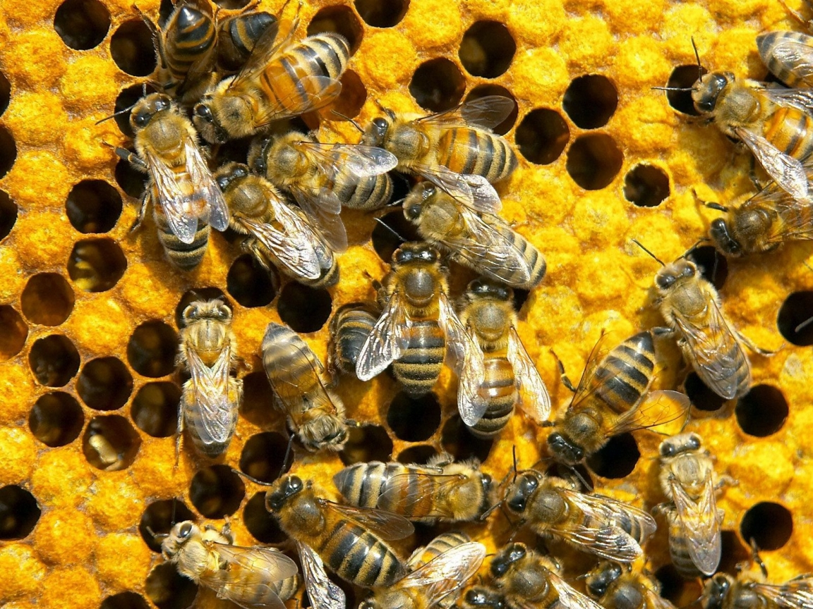 Заговоры на пчел.