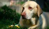 Заговор от болезни собак.