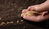 Заговоры при посеве семян.