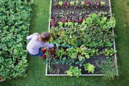 Молитва при посадке огорода.