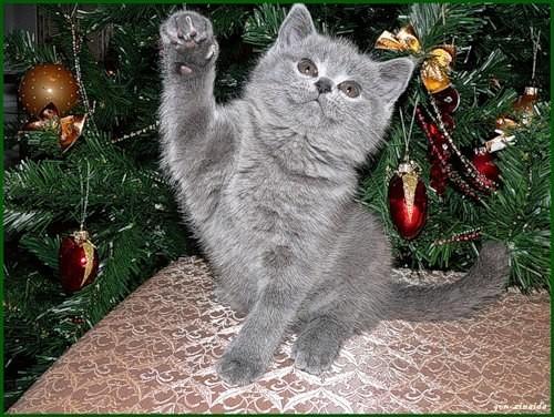 Новогоднее гадание с кошкой.