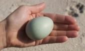 Заговор выкатывание болезни яйцом