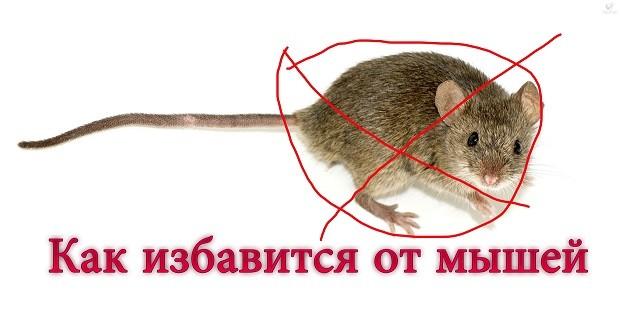 Заговор чтобы избавиться от мышей