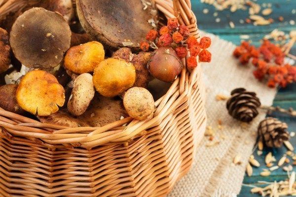 Заговор при сборе грибов в високосный год