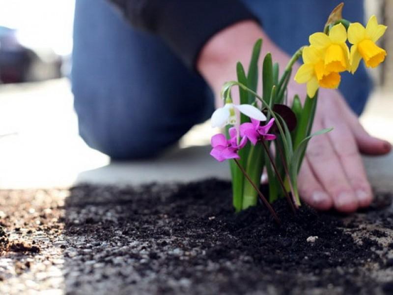 Заговоры для посадки цветов
