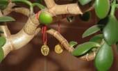 Что сделать, чтобы денежное дерево приносило деньги?